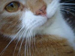 Zébulon, chat Gouttière