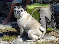 Zen, chien Carlin