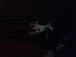 Zéphyr , chat Gouttière