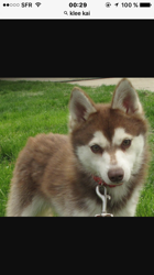 Zeus, chien Kai