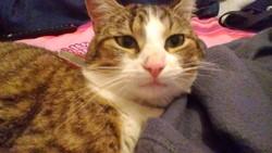 Zeus, chat Gouttière