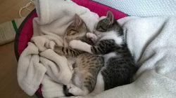 Zeus Et Athéna , chat Gouttière