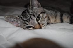 Zezette, chat Gouttière