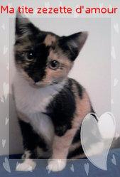 Zezette, chat