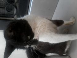 Ziam, chat Gouttière