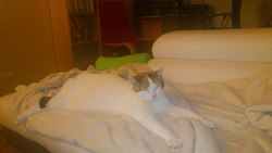 Zibeth, chat Gouttière