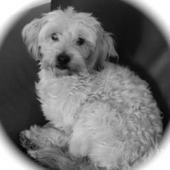 Ziggy, chien