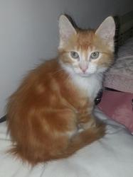Ziggy, chat Gouttière