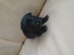 Zip, rongeur Rat