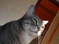Zitou, chat Gouttière