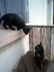 Ziva, chat