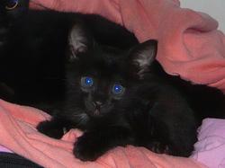 Ziva, chat Gouttière