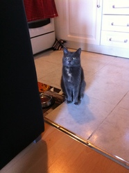 Zizou , chat Gouttière