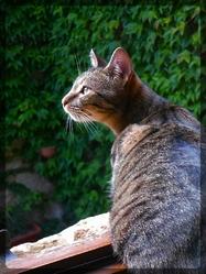 Zlatan, chat Gouttière