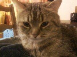 Zoé, chat