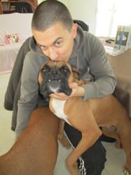 Zoé, chien Boxer