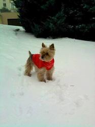 Zoe, chien