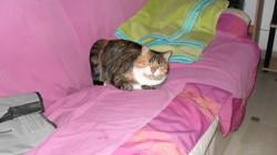 Zoe, chat Gouttière