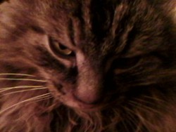 Zooz, chat Gouttière
