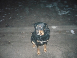 Zora, chien