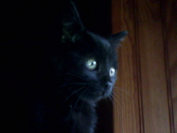 Zora, chat Gouttière