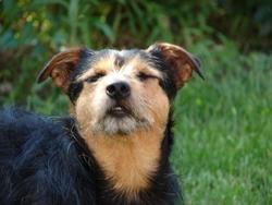 Zorro, chien