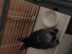 Zorro, rongeur Lapin