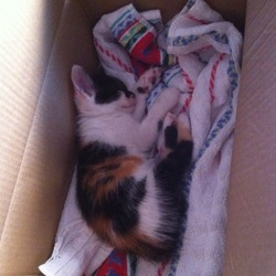 Yuzu, chaton Gouttière