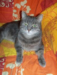Zouille, chat
