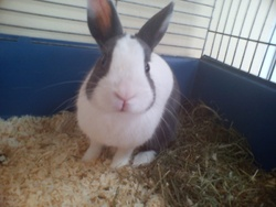 Zouky, rongeur Lapin