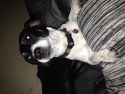 Zouko , chien