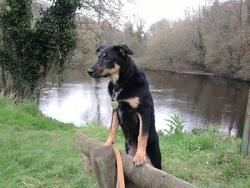 Zoya, chien
