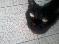 Zumba, chat