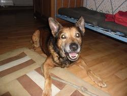 Zybee, chien