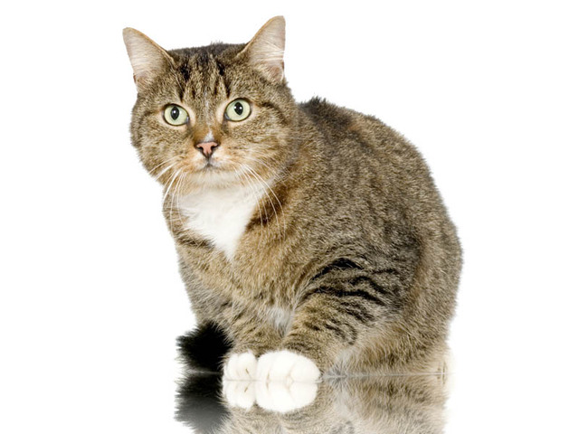 is egg yolk good for cats