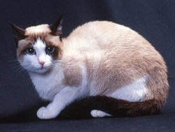 Photo de Snowshoe