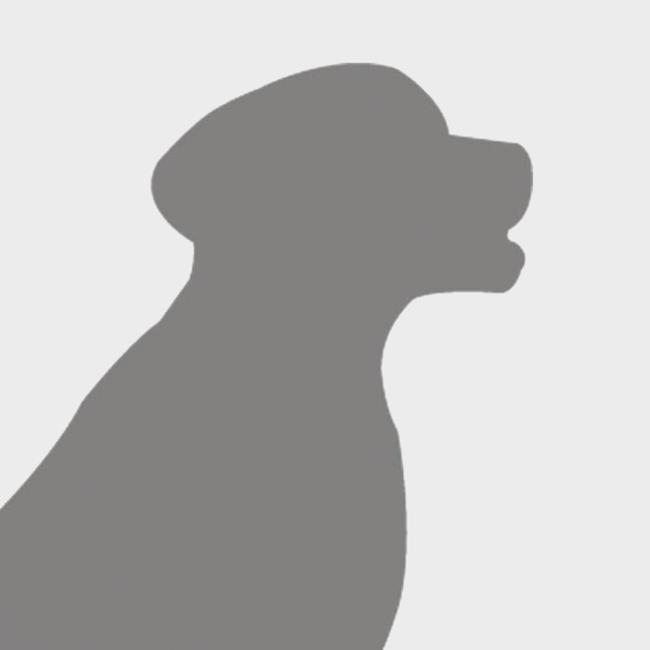 Le chien esquimau canadien