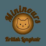Photo de British Longhair de l'élevage Chatterie Des Mininours
