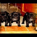 Photo de Carlin de l'élevage Elevage by Quakers Family