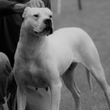 Photo de chiens de l'élevage De la Notte di Cane