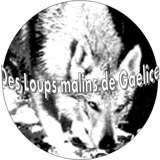Photo de chiens de l'élevage élevage des loups malins de gaelice