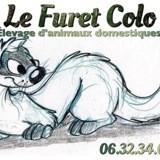 Photo de Furet de l'élevage Le Furet Colo