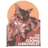 Photo de Maine Coon de l'élevage Les Maine Coons de Brunelet