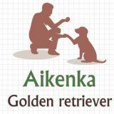 Photo de Golden Retriever de l'élevage Aikenka Elevage Golden retriever