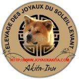 Photo de Akita Inu de l'élevage AKITA INU DES JOYAUX DU SOLEIL LEVANT