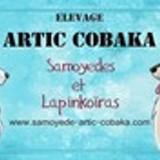 Photo de chiens de l'élevage ARTIC COBAKA