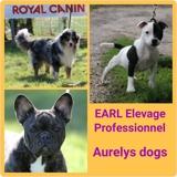 Photo de chiens de l'élevage EARL élevage Aurelys Dogs