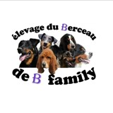 Photo de Beauceron de l'élevage élevage du berceau de b family