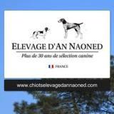 Photo de Braque allemand à poil court de l'élevage Elevage d'An Naoned