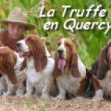 Photo de Basset Hound de l'élevage BASSET HOUND DE LA TRUFFE EN QUERCY